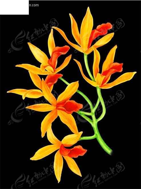 兰花 手绘花