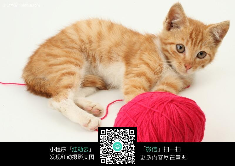 小花猫和毛线球图片