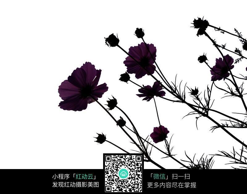 花枝剪影背景图片_花草树木图片