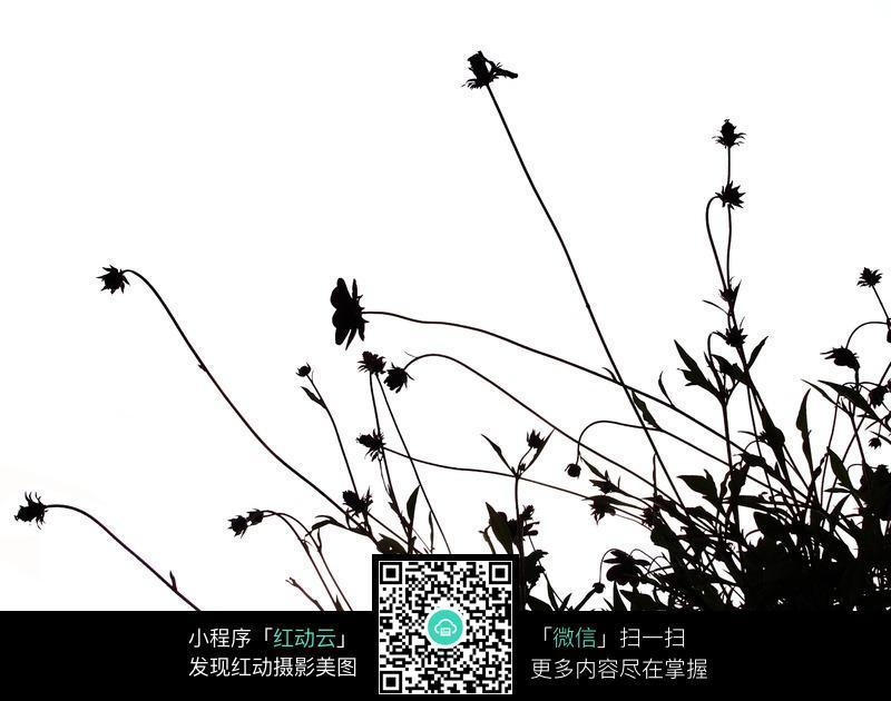 花枝杂草剪影背景_花草树木图片