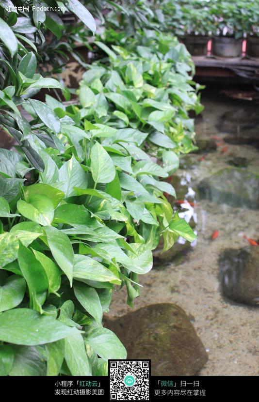 水边绿色植物