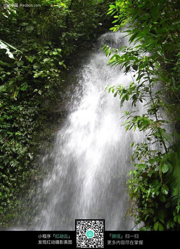 树林间的瀑布图片