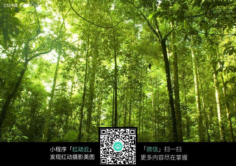 茂盛的绿色树林高清素材图片