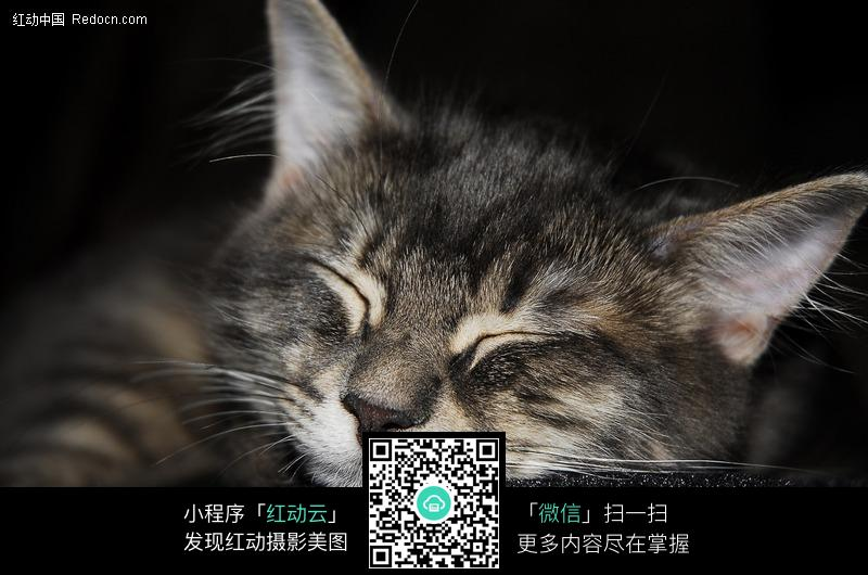 睡觉中的猫咪_陆地动物图片