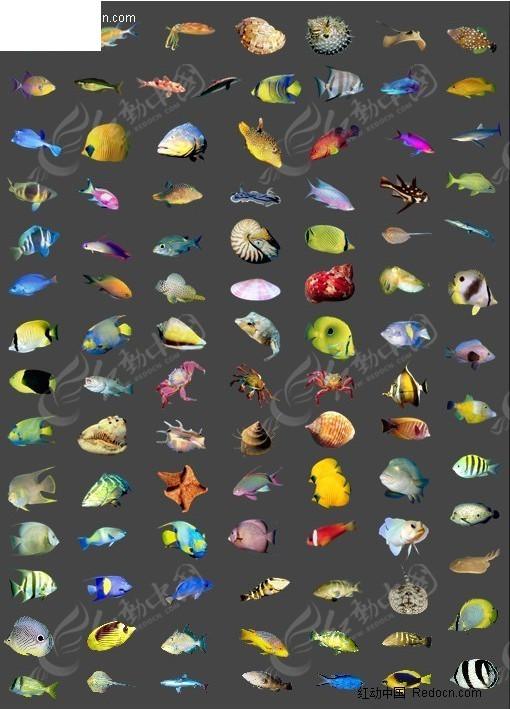海洋動物集錦圖片圖片