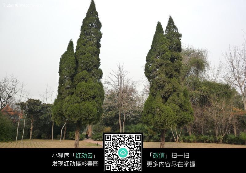 郑州碧沙岗公园松树图片_园林景观图片