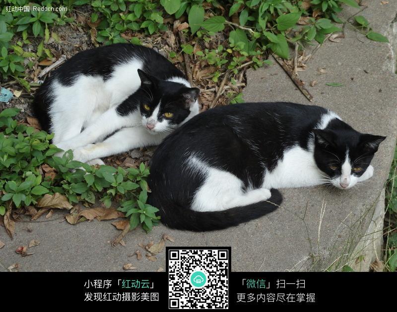 双猫图片_陆地动物图片