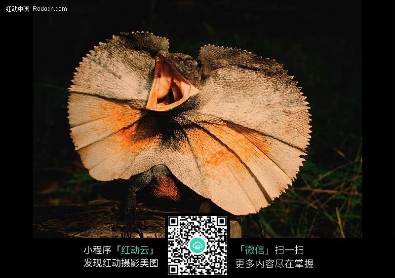 趴在树桩上张大嘴的晰蜴_陆地动物图片