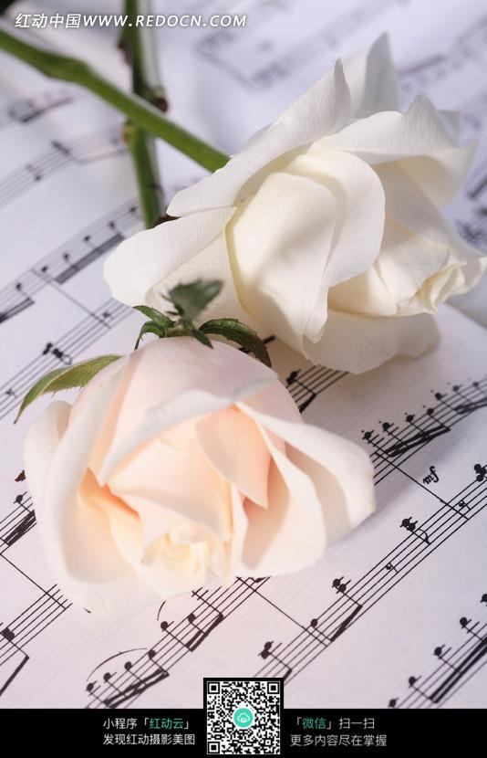 玫瑰花与乐谱图片免费下载 编号522819 红动网