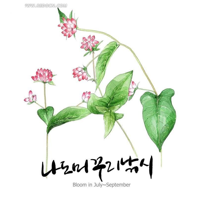 韩国手绘花朵素材插画图片
