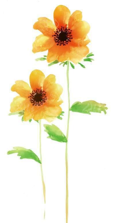 手绘黄色水彩花