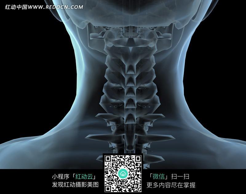颈椎骨骼透视特写图片