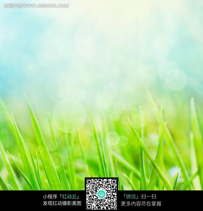 绿草光晕背景图片_花草树木图片