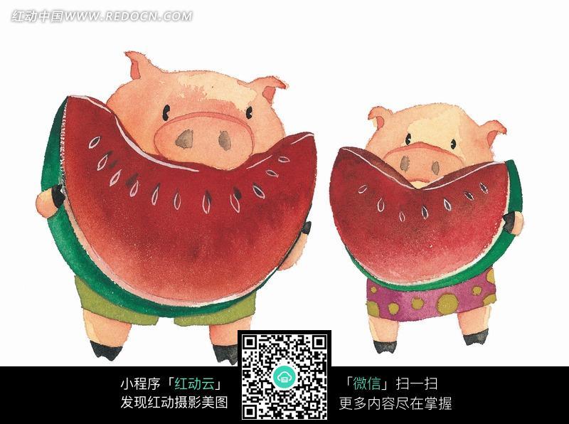 正在吃西瓜的两只情侣小猪图片