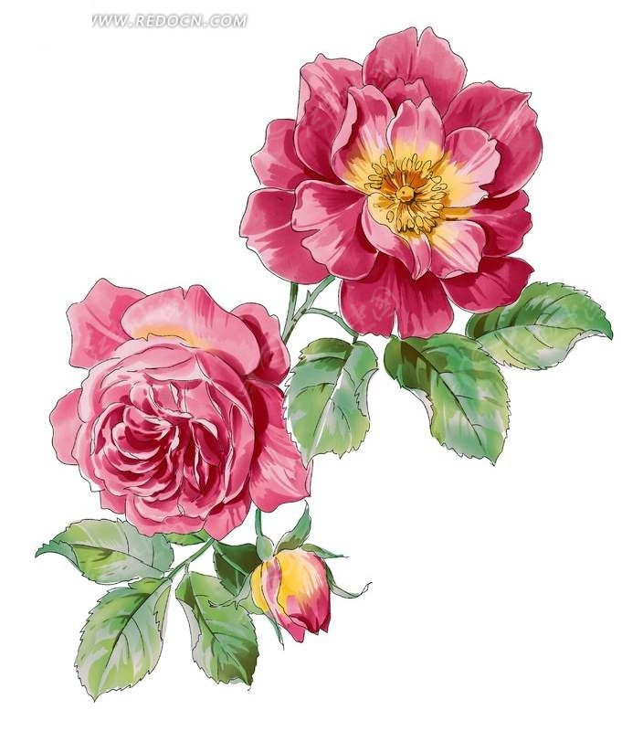 手绘红色牡丹和花蕾