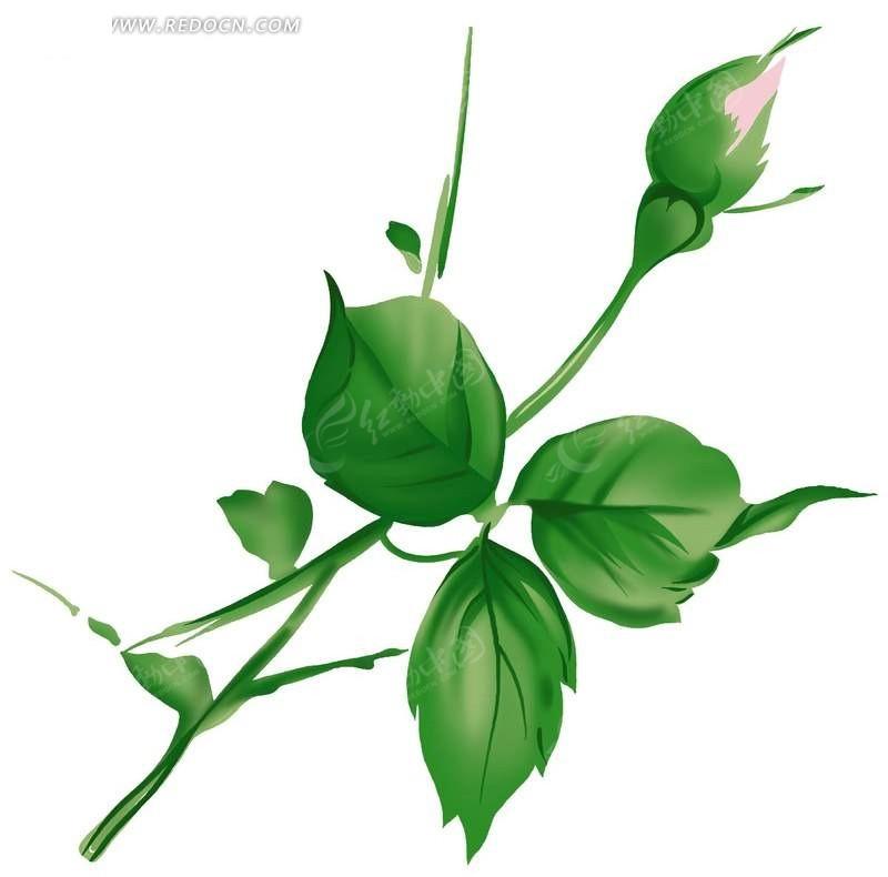 一支绿色手绘月季花苞psd