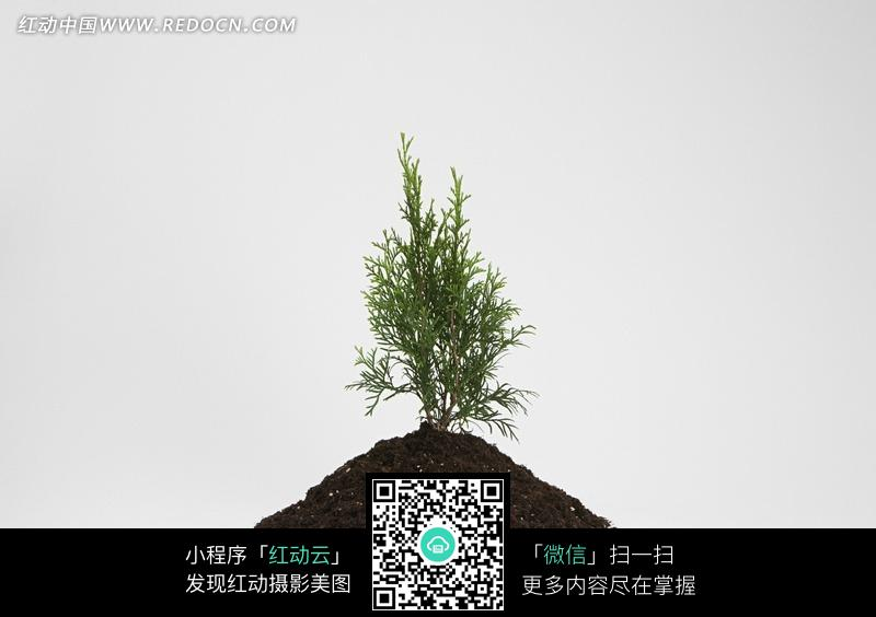小土堆上的绿色植物
