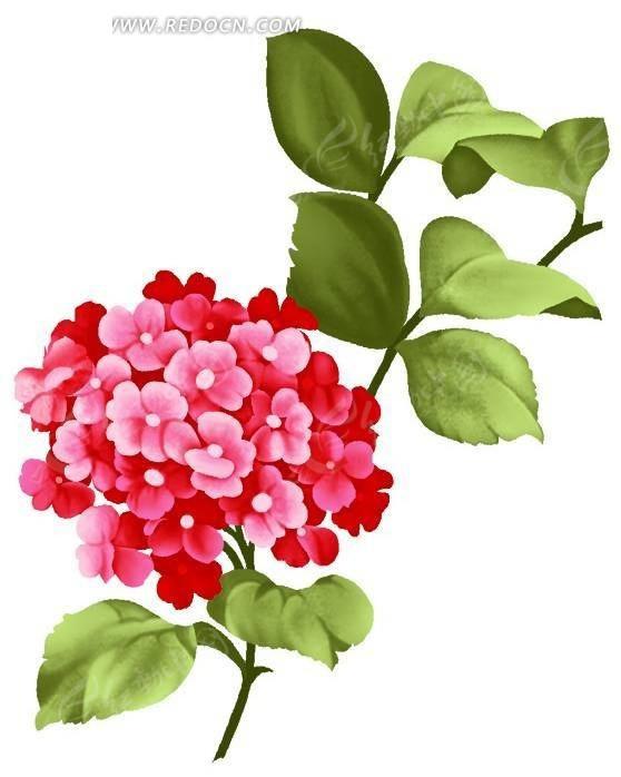 手绘红色绣球花与绿色叶子