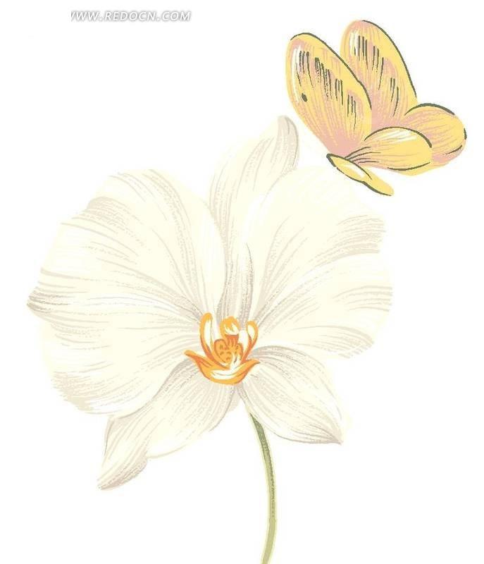 手绘白色水仙花与蝴蝶