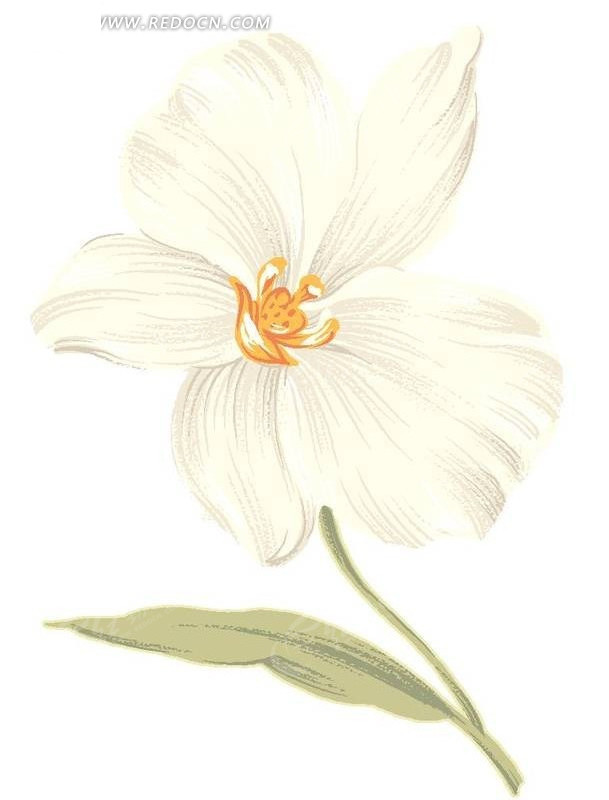 手绘白色水仙花与叶子
