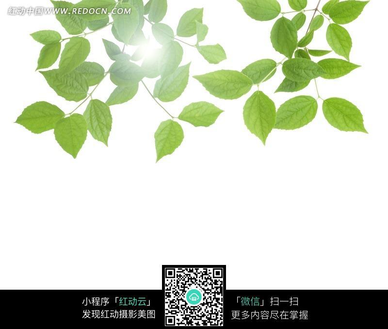 背景 壁纸 绿色 绿叶 设计 矢量 矢量图 树叶 素材 植物 桌面 800_678