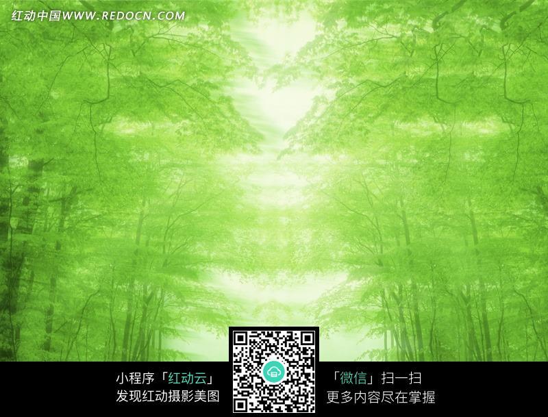 美丽梦幻树林风景图片