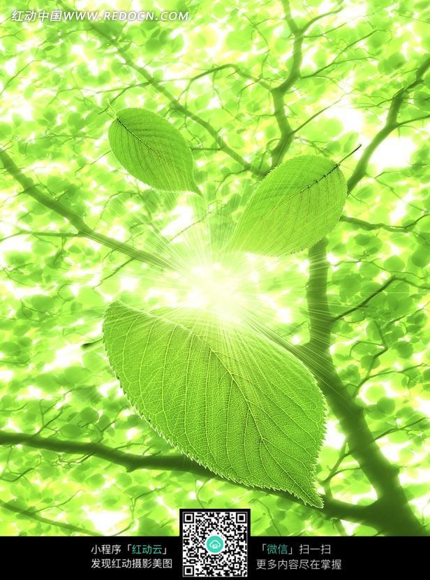 阳光树木壁纸