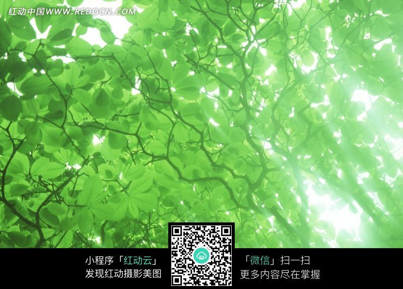 免费素材 图片素材 自然风光 自然风景 阳光下树荫壁纸图