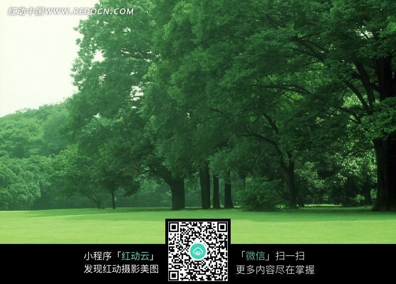 草地上的茂密树林jpg