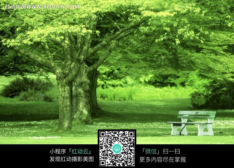 长椅 草地 高清 自然 绿色 清新 背景 纹理 底纹  自然风光 风景图片