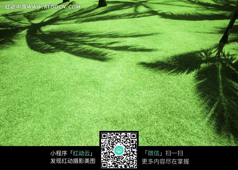 俯视镜头下的绿色草地图片