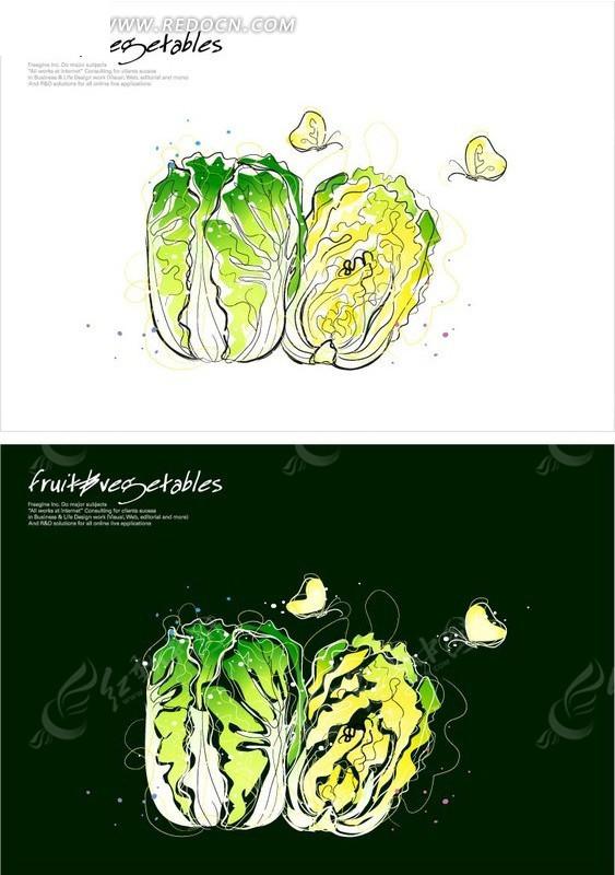 手绘大白菜和蝴蝶;; 手绘风格的圆白菜插画矢量图_花纹花边;