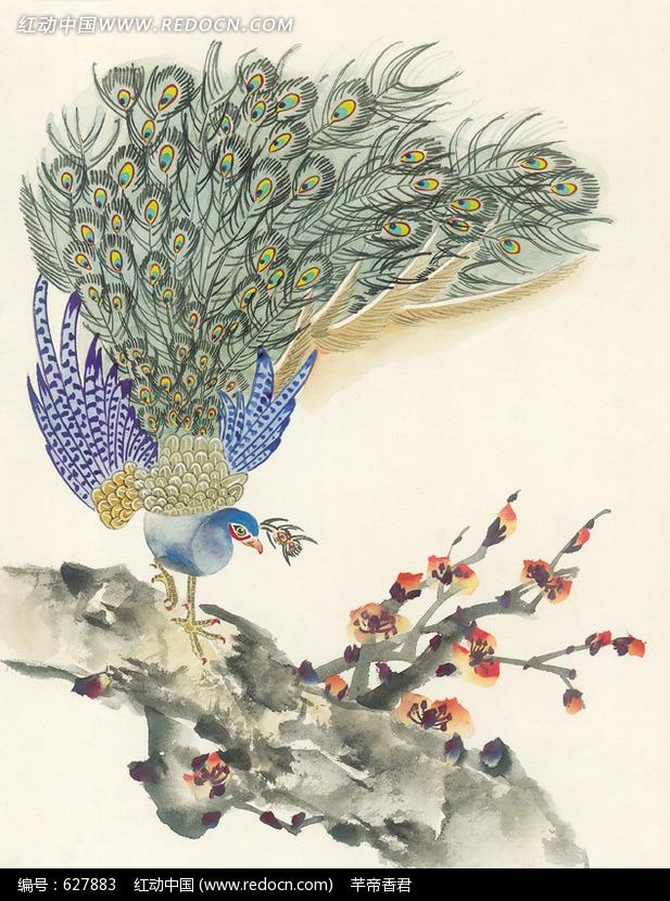 站在梅花树上的孔雀