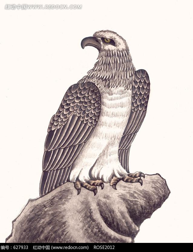中国工笔动物-石头上的老鹰