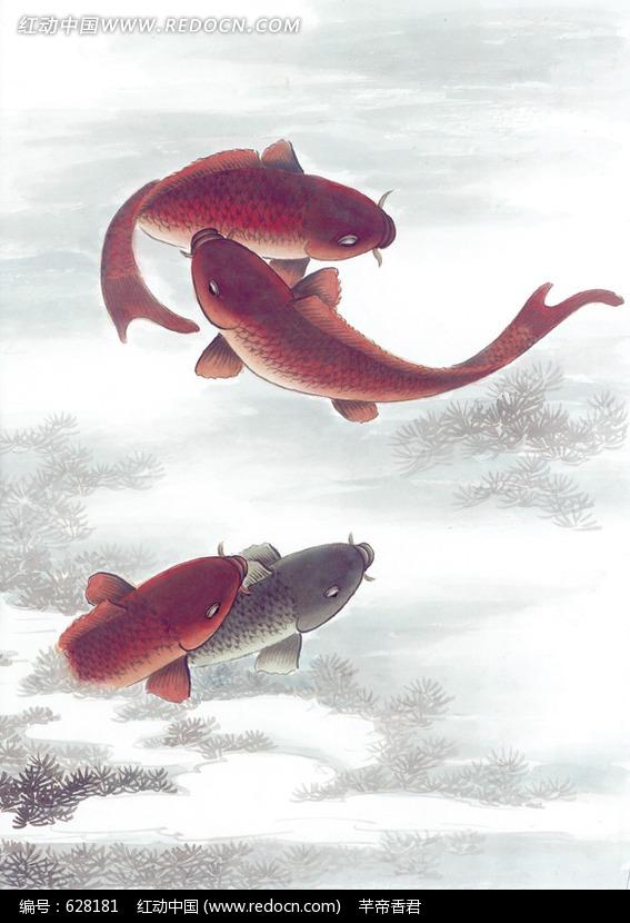 中国写意动物-四条游动的锦鲤