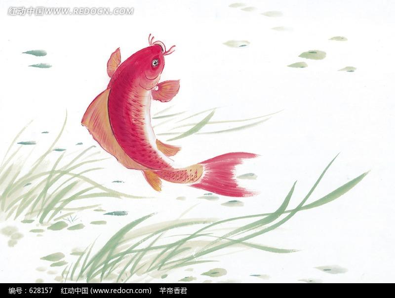 中国写意动物-一条红色锦鲤图片