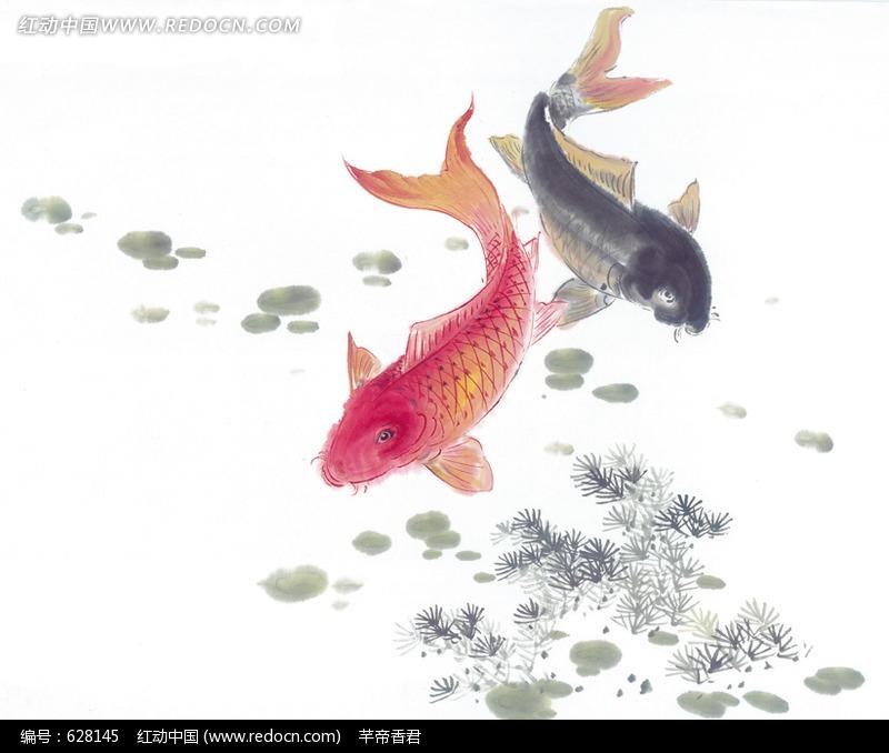 荷花红鲤鱼_动物_红动手机版