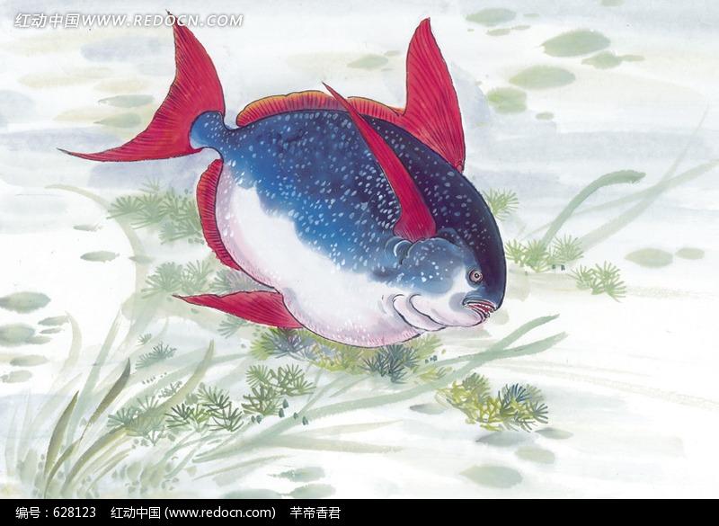 红鳍胖头鱼水彩画jpg图片_水中动物图片