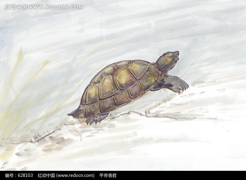 乌龟上岸图_水中动物图片