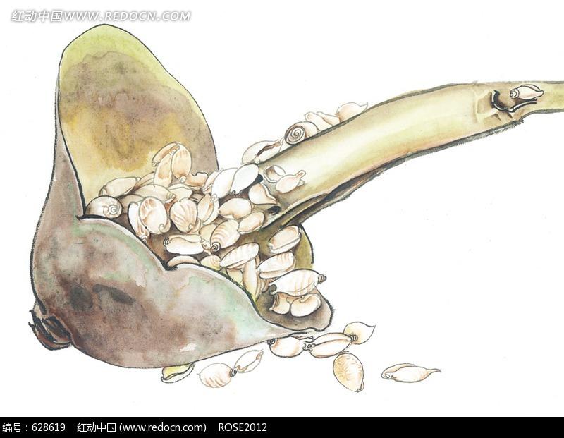 手绘水瓢里的贝壳图片