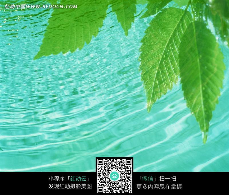 蓝色水波上的竹叶船_花草树木图片
