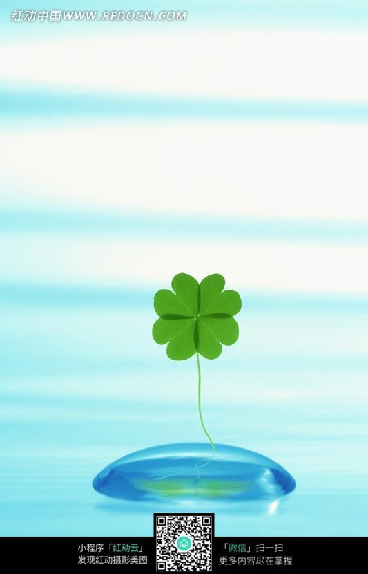 水滴和四叶草图片