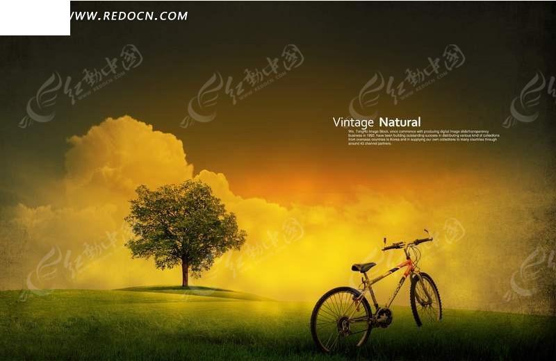 树与自行车的怀旧图片_风景