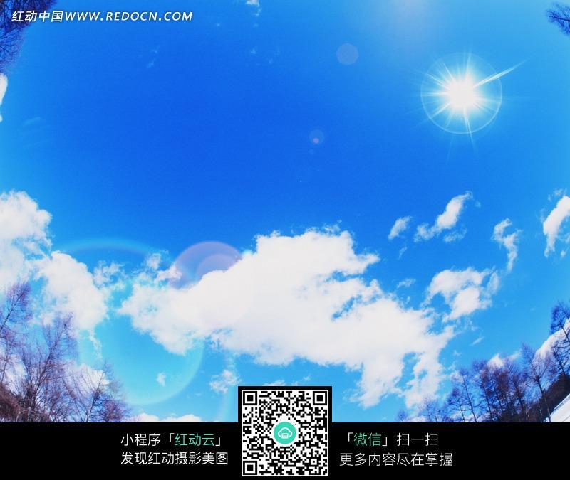 蓝天白云/树木/光晕构成的图片