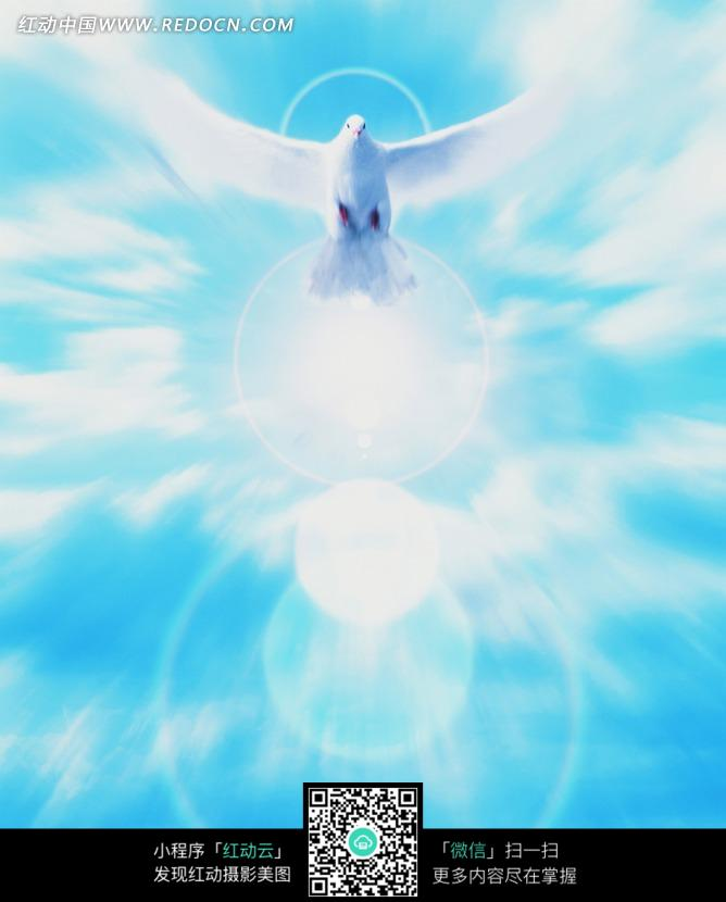 天空飞翔的白鸽图片
