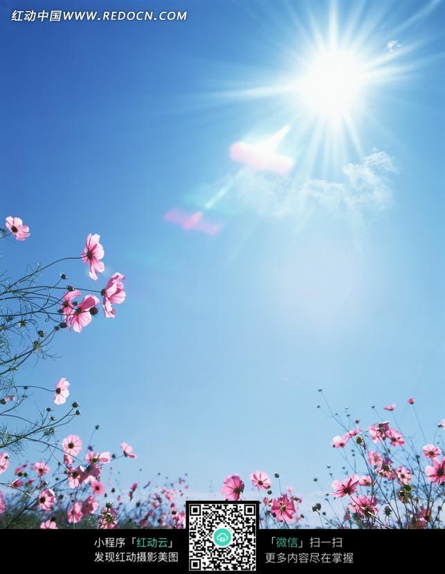 阳光照耀下的野花照片