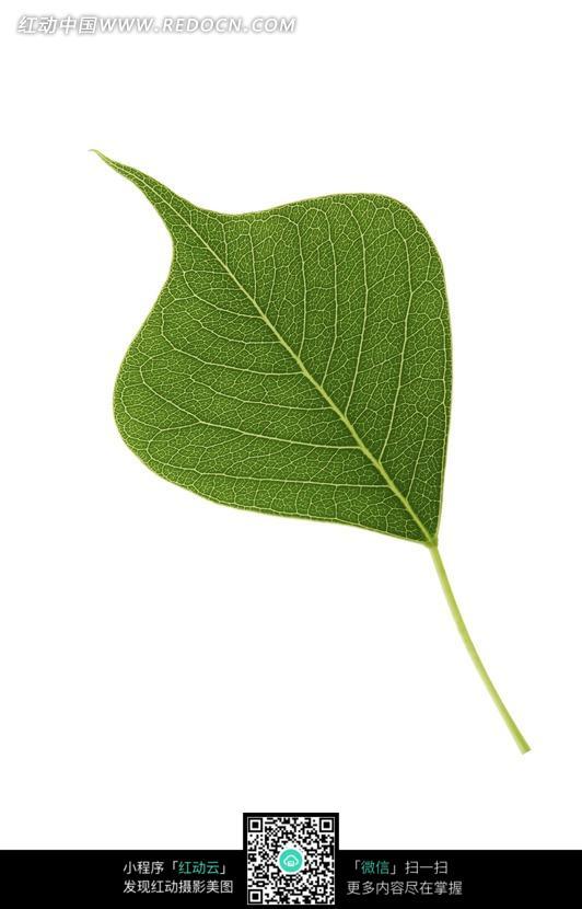 一片树叶摄影照片图片