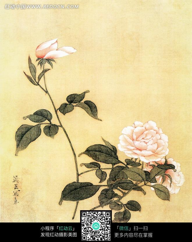手绘牡丹花鸟图jpg 百鸟之王-孔雀牡丹花图 手绘对称牡丹花图 彩色