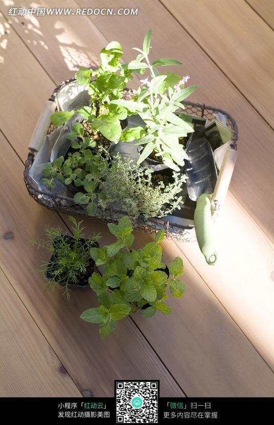 植物盆栽和园艺工具