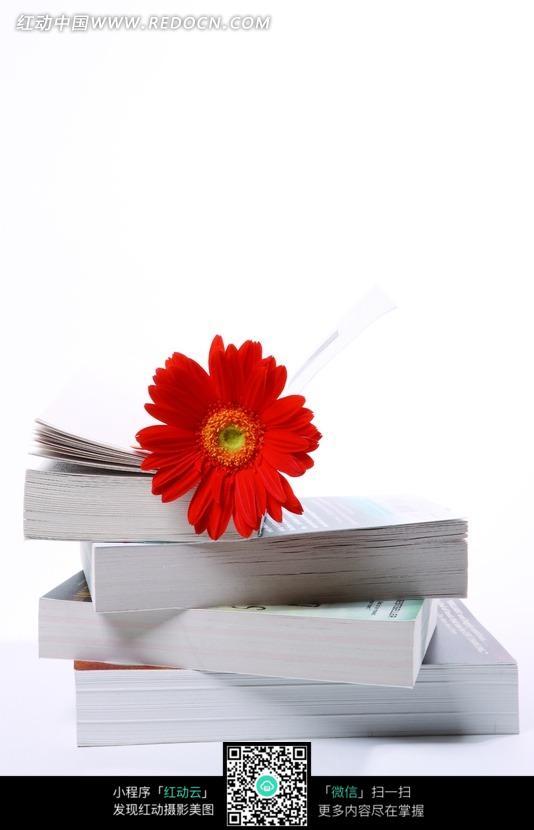 放在书本上面的红色花朵照片
